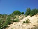 Липса на четириноги гръцки емигранти отчитат в Мочура