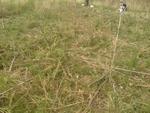 Гръцки крави и коне опустошават реколтата в село Мочура
