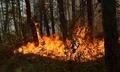 Подадоха лъжлив сигнал за пожар в горски масив край Рибница