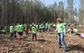 Да създадем и осиновим гора с ЮЦДП - Смолян