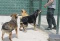 RUDOZEM STREET DOG RESCUE: Принудени сме да прекратим процедурите за получаване на официална регистрация за приюта за кучета и котки в Елховец