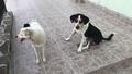 Гласът на опозицията: Какво се случва с бездомните кучета в общината?
