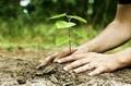 """""""Младежи за устойчиво развитие"""" организират акция за засаждане на дръвчета на 11 април"""