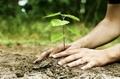 Организират акция за засаждане на дръвчета в Чепинци на 11 април