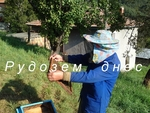Исеин Моллов: Нашият край не е да гледаш пчели за производство на мед, нашето е любителска работа!