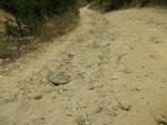 Пътят за село Бреза е в окаяно състояние, жалват се потърпевши