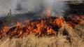 """Пожарникари гасиха пожар в местността """"Юртата"""""""